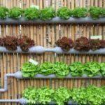 Publikasi Atas Hasil Riset Pertanian Demi Kepentingan Pangan