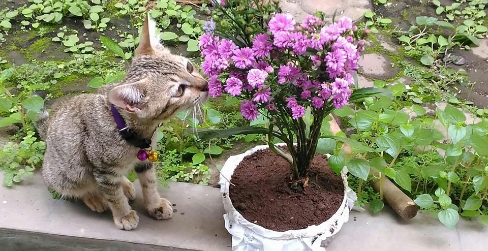Suka Duka Memelihara Kucing
